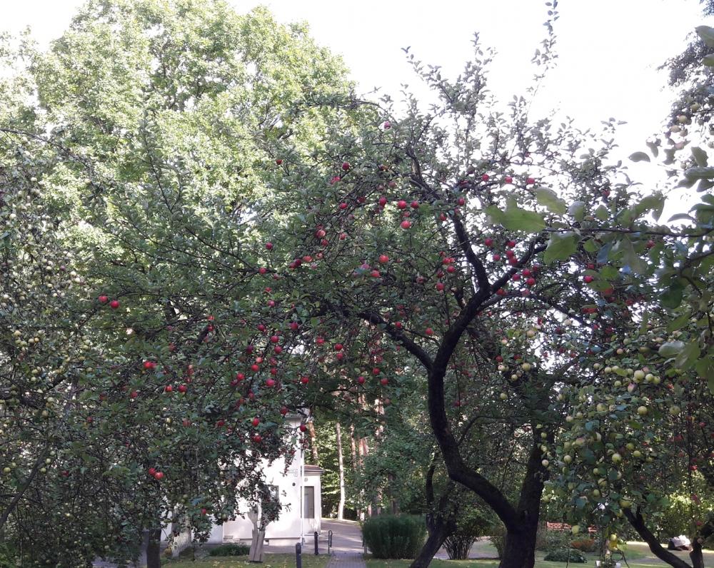 S. Nėries memorialinio muziejaus sodas. 2016 m.