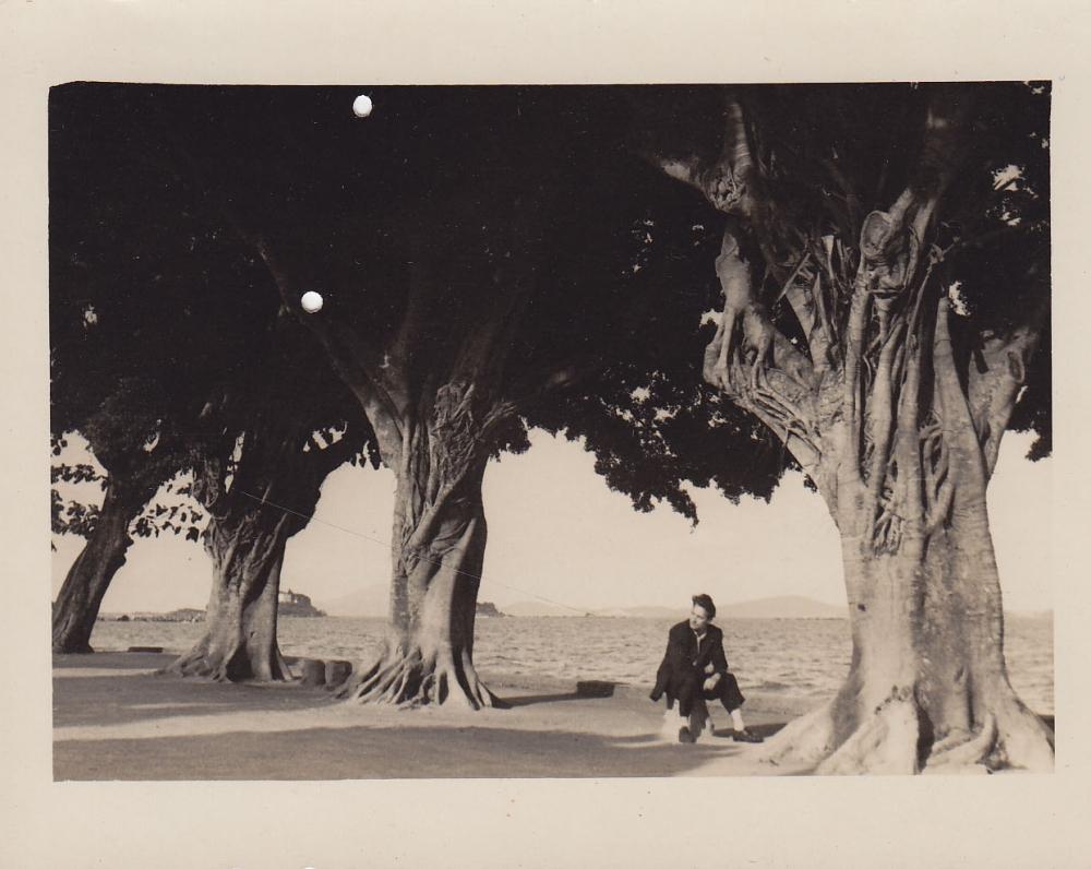 Seni medžiai jūros pakrantėje. Brazilija, apie 1946–1950 m.