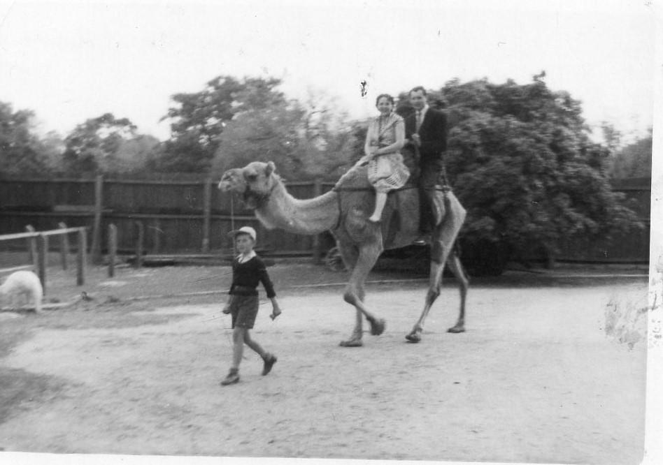J. Švabaitė su vyru Jurgiu Gyliu ant kupranugario. Adelaidė, 1955 m.