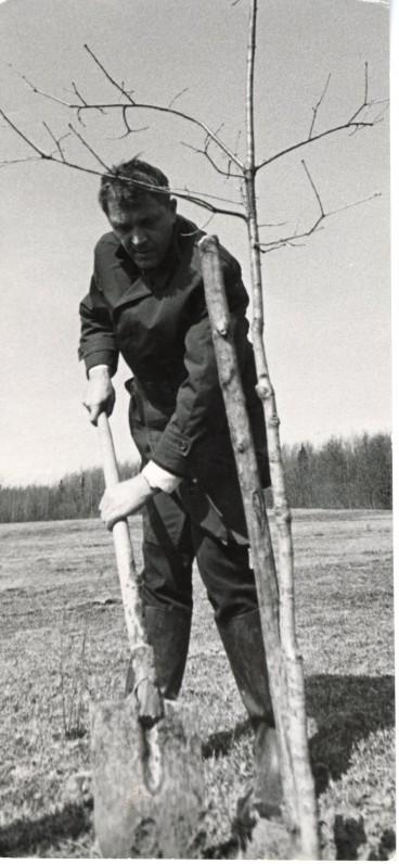 Poetas A. Maldonis sodina ąžuoliuką latvių poeto J. Rainio tėviškėje Varslavanuose. 1968 m.