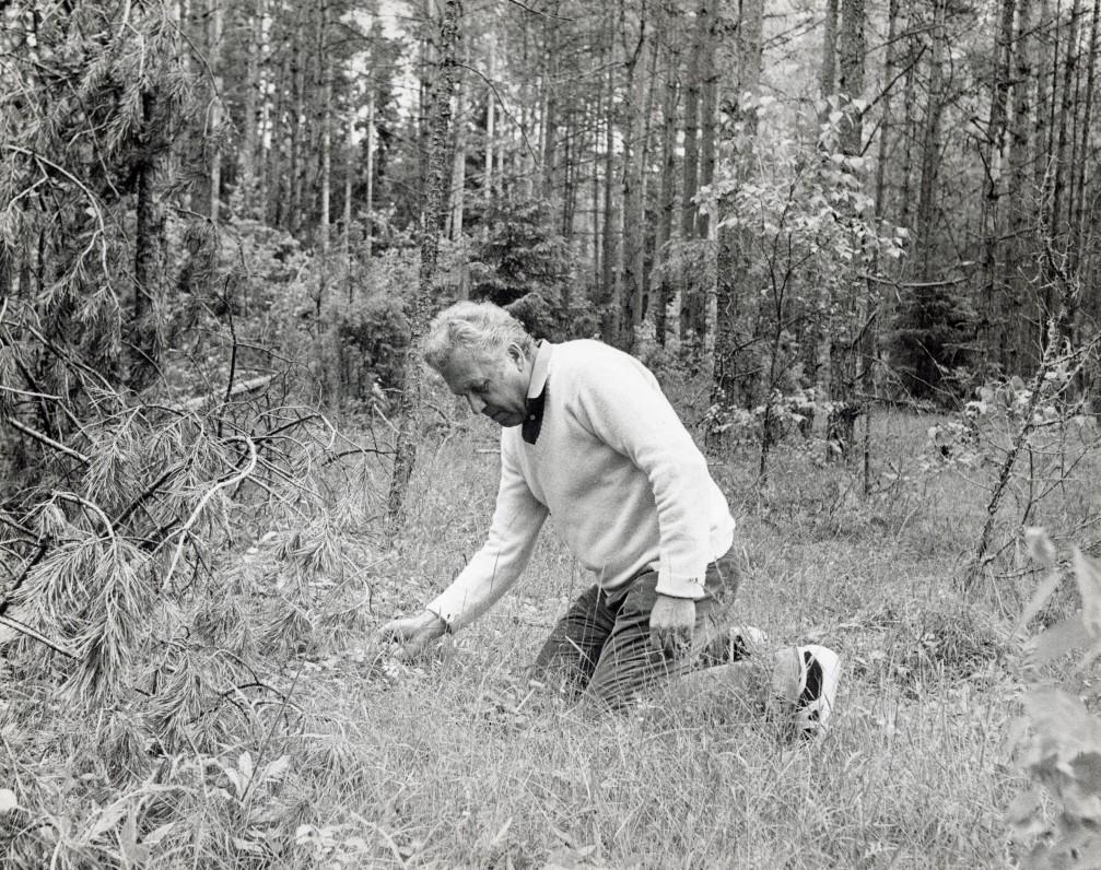 Poetas žemuogiauja Linmarkyje. 1984 m. Fotografas R. Rakauskas
